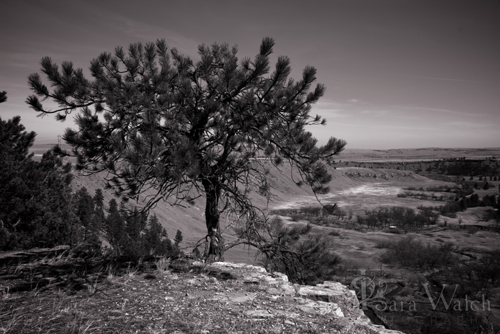 ranch-rimrock-2009-03-30trw_0099